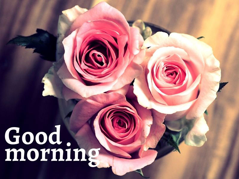 50 Good Morning Wish Images With Roses Lets Buy Best